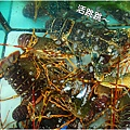 龍蝦29.jpg