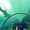 水族館22.jpg