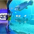 水族館24.jpg