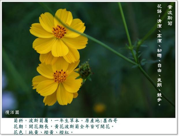 DSC06957A.jpg