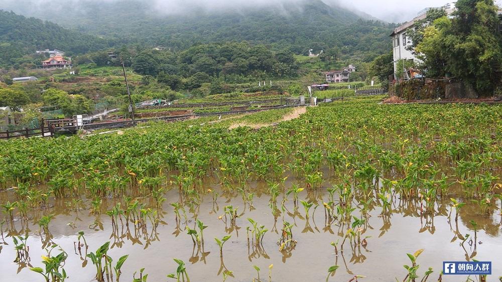 竹子湖遊_1132.JPG