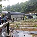 竹子湖遊_5673.JPG