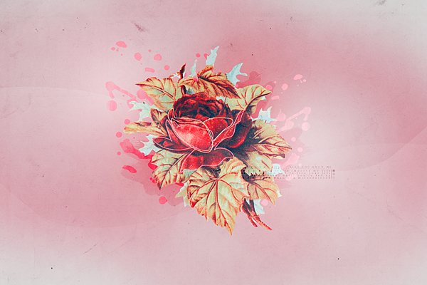 _roses_texture_1.png