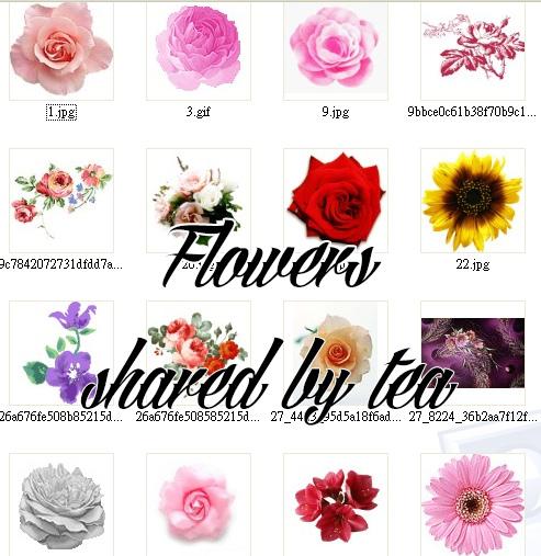 flowerspreview.jpg