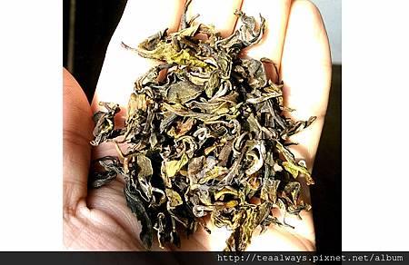 20150309洭緹黃茶似溫和綠茶1