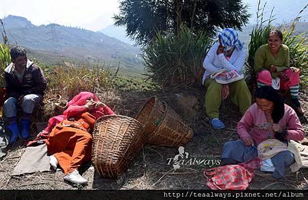 20150318米瑞克區休息中的塔爾波莊園採茶工1