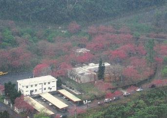 台電寒暑期教師研習,台電電廠旅遊,春日櫻花
