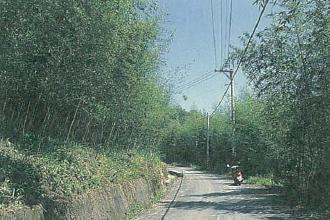 台電寒暑期教師研習,台電電廠旅遊,南投旅遊蓮華池生態保護區