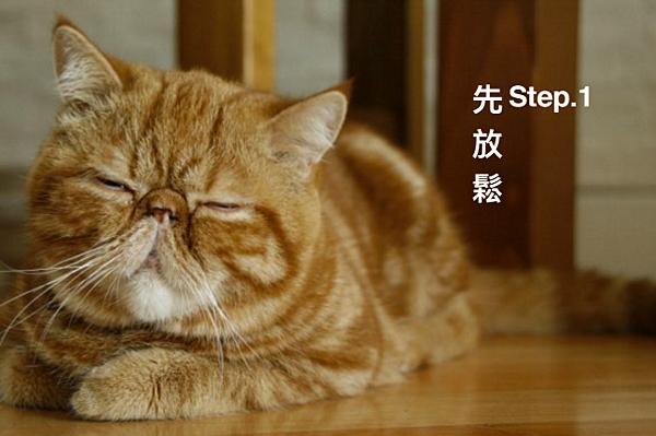 貓氣功1.png