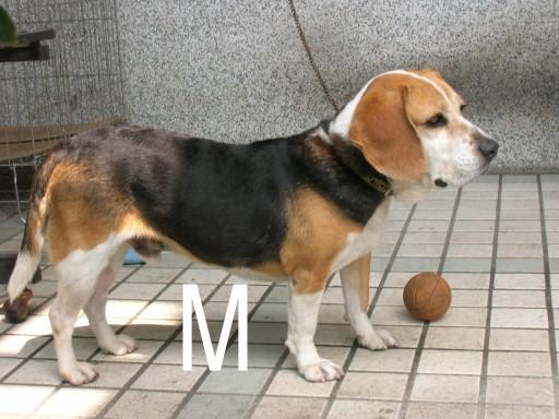 Mm-DSCN6268.JPG