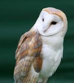 Wesley the Owl 4.jpg