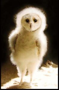 Wesley the Owl 1.jpg