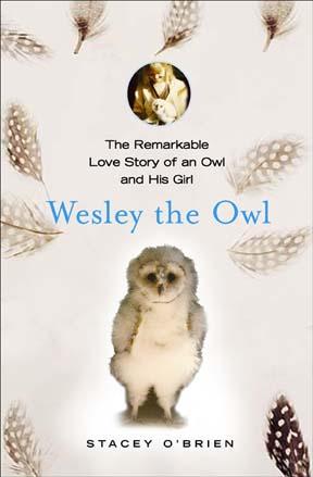 Wesley the Owl 2.jpg