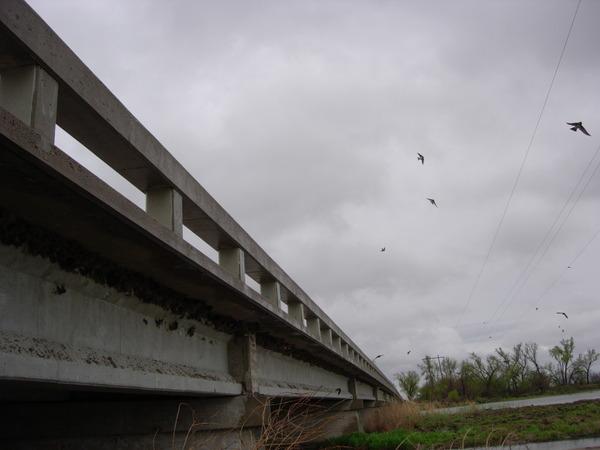 橋下的燕巢