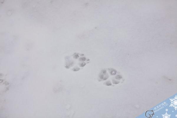 snow021.jpg
