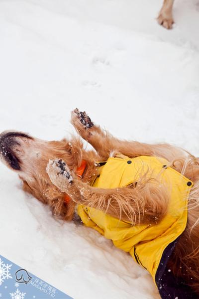 snow015.jpg
