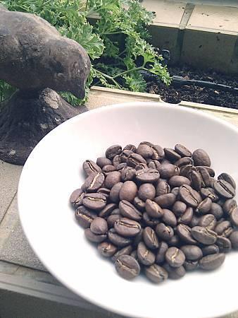 瓜地馬拉聖費麗莎莊園競標有機咖啡豆