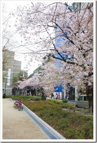SJShih_201304_Kyoto_0025