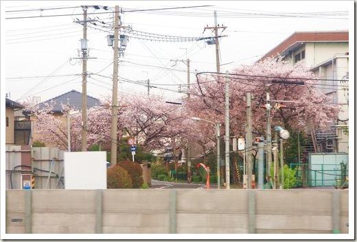 SJShih_201304_Kyoto_0010