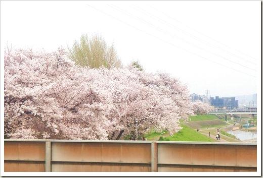 SJShih_201304_Kyoto_0012