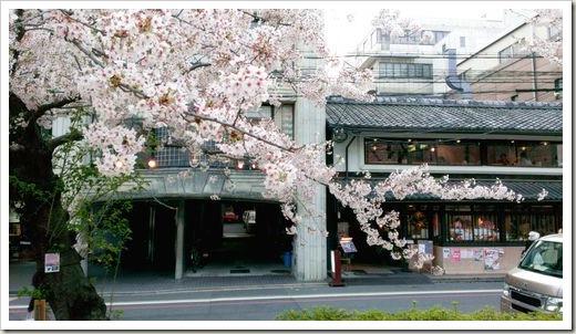 SJShih_201304_Kyoto_M_0010