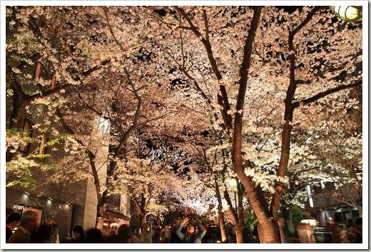 SJShih_201304_Kyoto_0043
