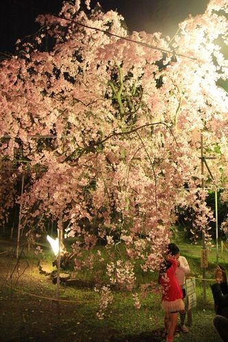 SJShih_201304_Kyoto_0326