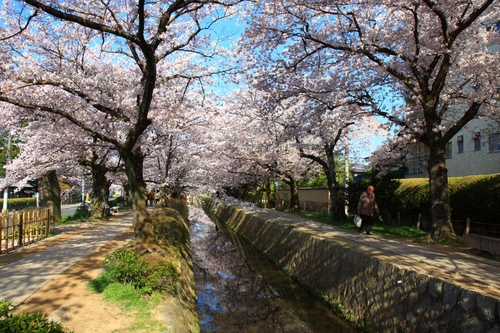 SJShih_201304_Kyoto_0095.JPG