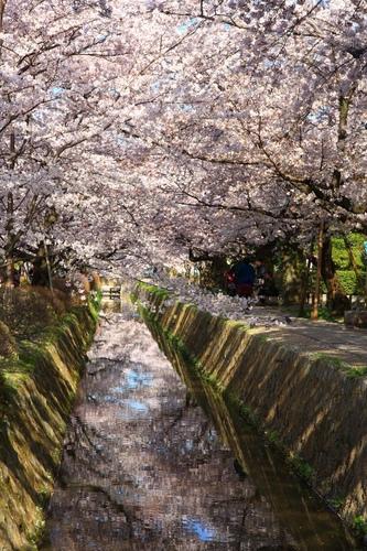 SJShih_201304_Kyoto_0097.JPG