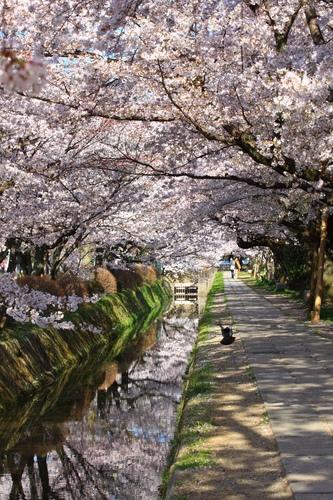 SJShih_201304_Kyoto_0102.JPG