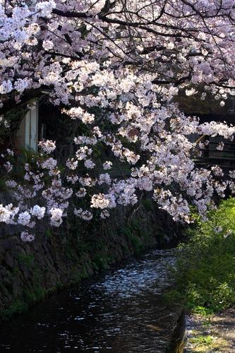 SJShih_201304_Kyoto_0105.JPG
