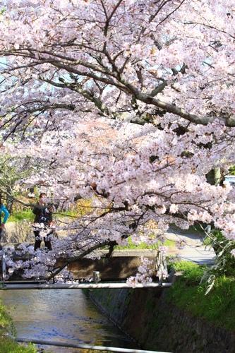 SJShih_201304_Kyoto_0118.JPG