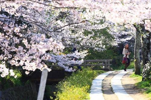 SJShih_201304_Kyoto_0119.JPG