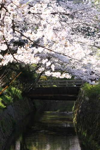SJShih_201304_Kyoto_0120.JPG