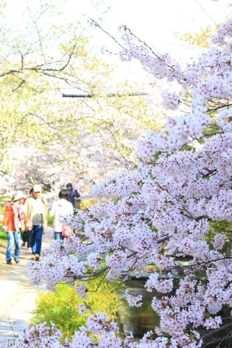 SJShih_201304_Kyoto_0124.JPG