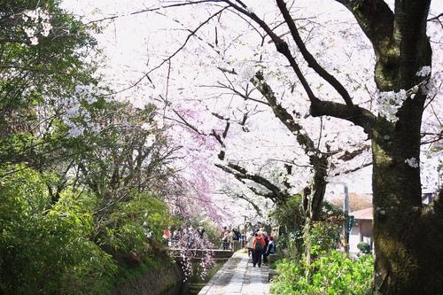 SJShih_201304_Kyoto_0169.JPG