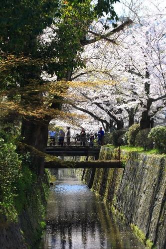 SJShih_201304_Kyoto_0183.JPG