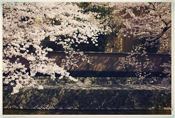 SJShih_201304_Kyoto_0267_美图.jpg