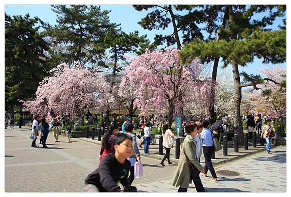 SJShih_201304_Kyoto_0252_美图.jpg