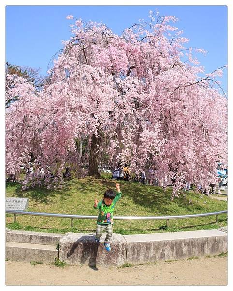 SJShih_201304_Kyoto_0248_美图.jpg