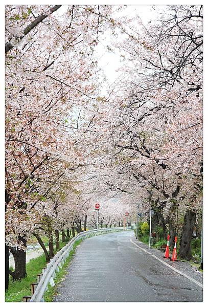 SJShih_201304_Kyoto_0380_美图.jpg