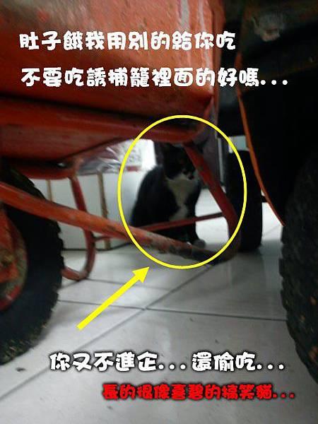 2011-07-14疑似偷吃賊.JPG