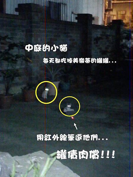 2011-07-12中庭的貓_1.JPG