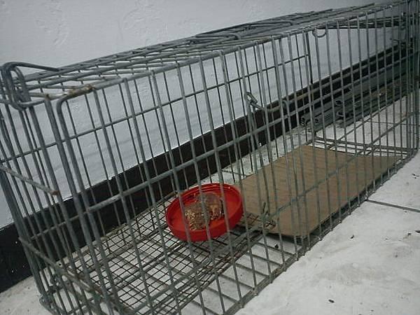 2011-07-14空的誘捕籠_1.JPG