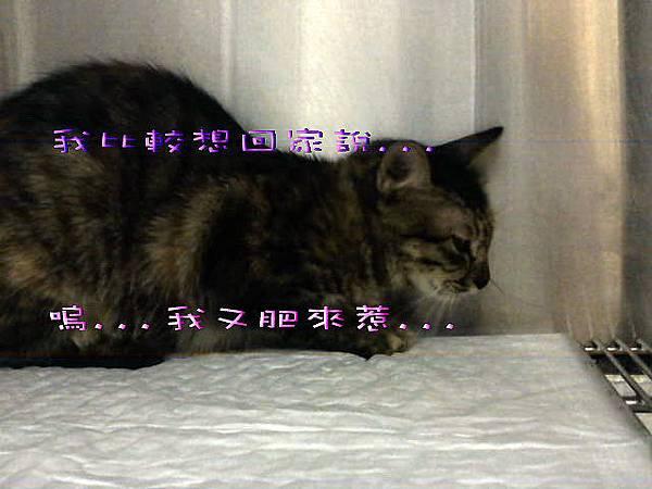 2011-07-15美樂蒂找到了.JPG