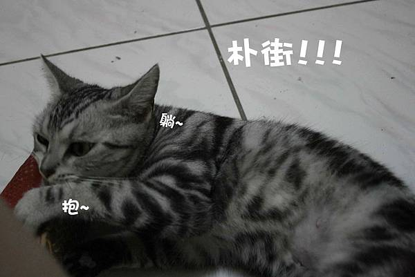 2011-10-04俏妞_01-1.jpg