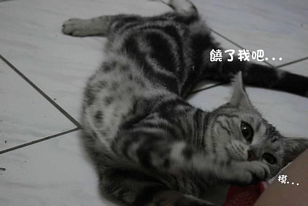2011-10-04俏妞_04-1.jpg