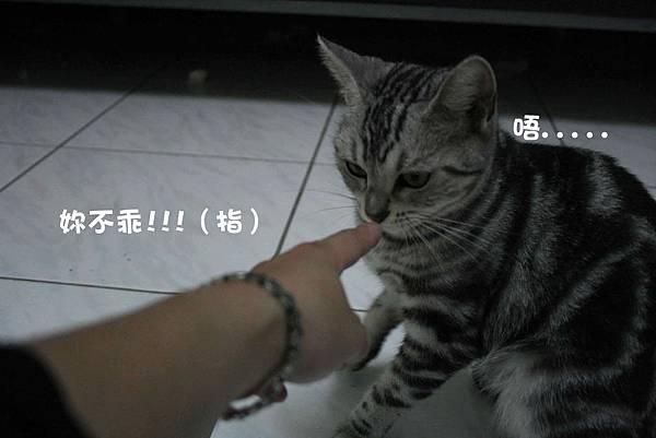 2011-10-04俏妞_06-1.jpg