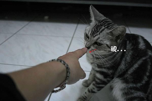 2011-10-04俏妞_07-1.jpg