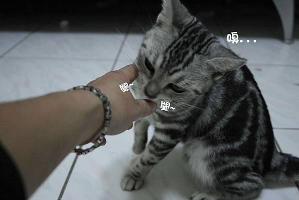 2011-10-04俏妞_08-1.jpg